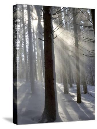 Snowy Forest in Morning Sun, Bavaria, Germany