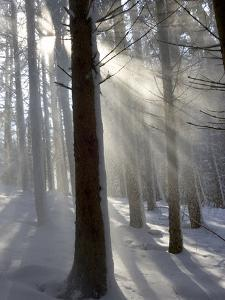 Snowy Forest in Morning Sun, Bavaria, Germany by Konrad Wothe