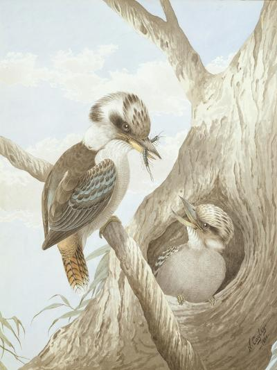 Kookaburras Feeding at a Nest in a Tree, 1892-Neville Henry Peniston Cayley-Giclee Print