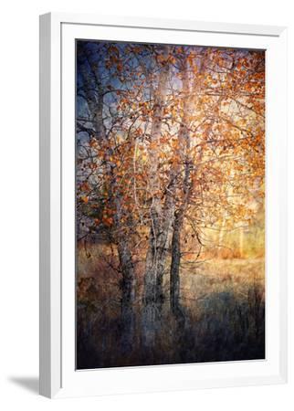 Kootenay Fall 2-Ursula Abresch-Framed Photographic Print