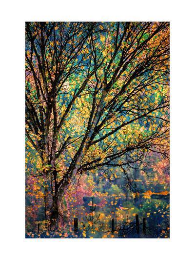 Kootenay Fall 3-Ursula Abresch-Art Print