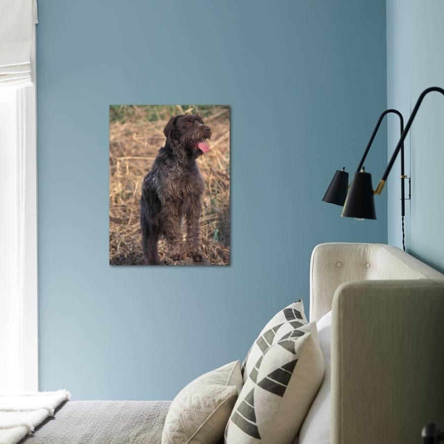 Korthal\'s Griffon / Wirehaired Pointing Griffon Portrait ...