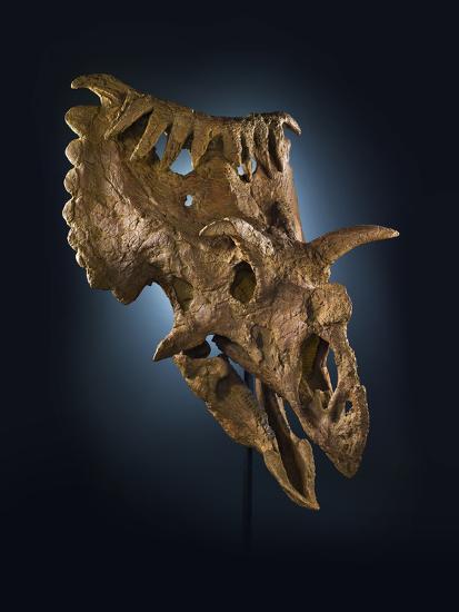 Kosmoceratops Richardsoni, a Rhino-Size Plant-Eater That Lived on Laramidia-Cory Richards-Photographic Print