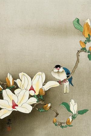 Blue Bird and Magnolia