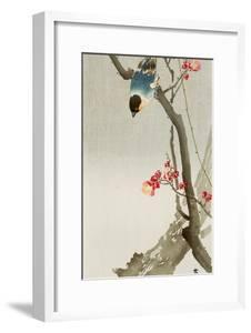 Blue Bird on a Plum Tree by Koson Ohara