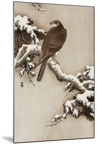 Goshawk on a Snow Covered Pine Branch by Koson Ohara