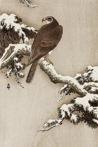 Goshawk on a Snow Covered Pine Branch by Koson Ohara