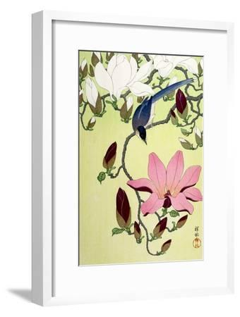 Magpie with Pink and White Magnolia Blossoms