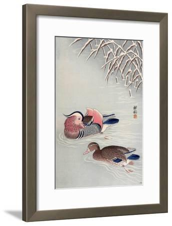 Mandarin Ducks in Snow