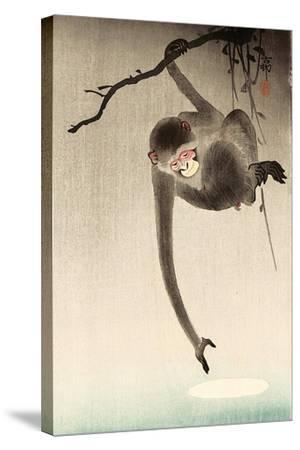 Monkey and Moon