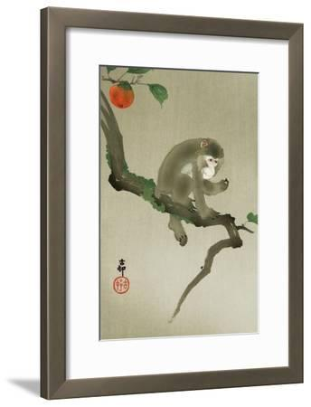 Monkey and Persimmon