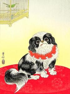 Pekingese Dog and Bush Warbler by Koson Ohara