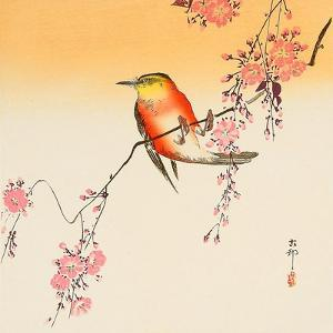 Red Bird and Cherry Blossoms by Koson Ohara