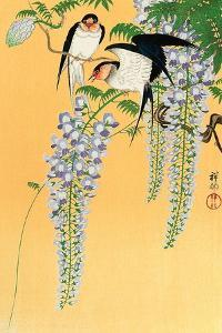 Swallows and Wisteria by Koson Ohara
