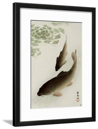 Two Carp and Blooming Water Plants