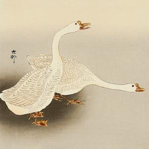 Two White Geese by Koson Ohara