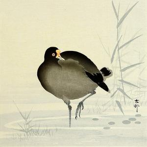 White-Fronted Goose by Koson Ohara