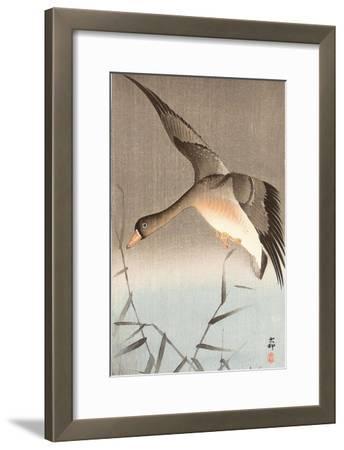 Wild Goose