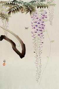 Wisteria and Bee by Koson Ohara