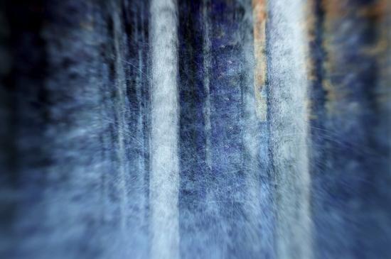kostas-barbadimos-the-forest
