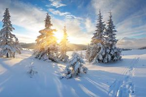 Frosty Morning in the Mountains, Panorama of Winter Mountains, Ukraine, Carpathians by Kotenko