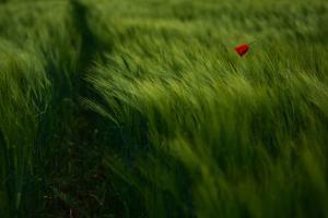 In the Wind by Kovop
