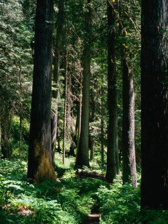 Forest, USA