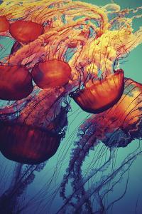 Jellyfish by Krista Glavich