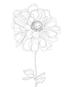Linear Bloom - Bud by Kristine Hegre