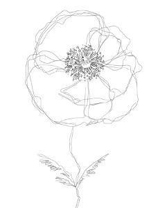 Linear Bloom - Flourish by Kristine Hegre