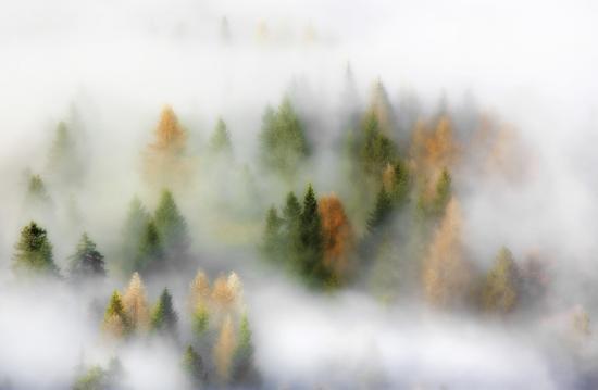 kristjan-rems-autumn-dream