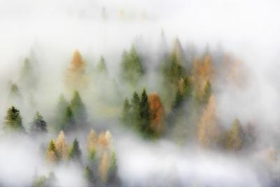 Autumn Dream by Kristjan Rems