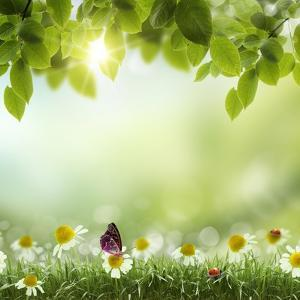 Spring or Summer Season Abstract Nature Background with Grass and Blue Sky in the Back by Krivosheev Vitaly