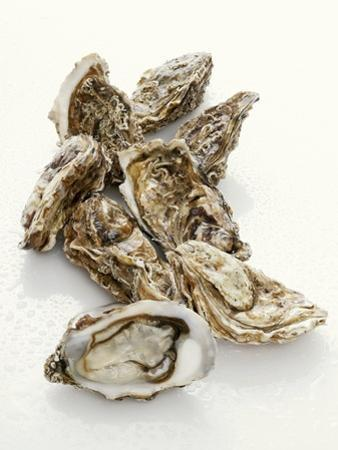 Fresh Oysters with Drops of Water by Kröger & Gross