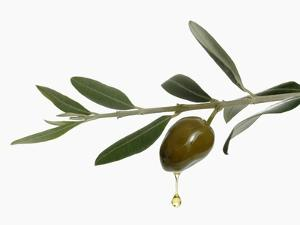 Olive Oil Dripping from Olive on Branch by Kröger & Gross