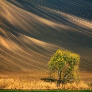 Tree by Krzysztof Browko