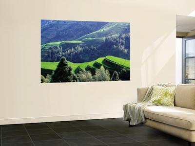 Overhead of Dragon's Backbone (Longji Titian) Rice Terraces