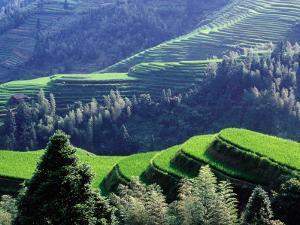 Overhead of Dragon's Backbone (Longji Titian) Rice Terraces by Krzysztof Dydynski