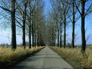 Tree-Lined Country Road in the South-East Region, Poland by Krzysztof Dydynski