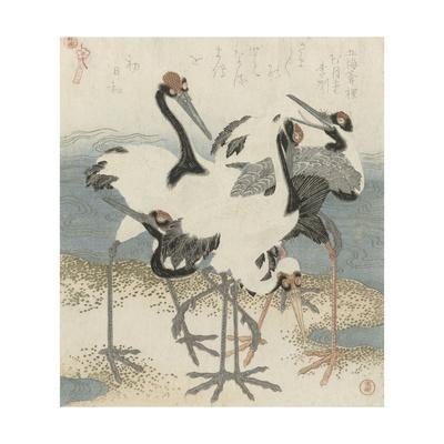 Cranes by the water, c.1816