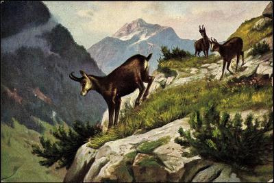 Künstler Bergziegen an Einem Abhang, Gebirge, Abgrund--Giclee Print