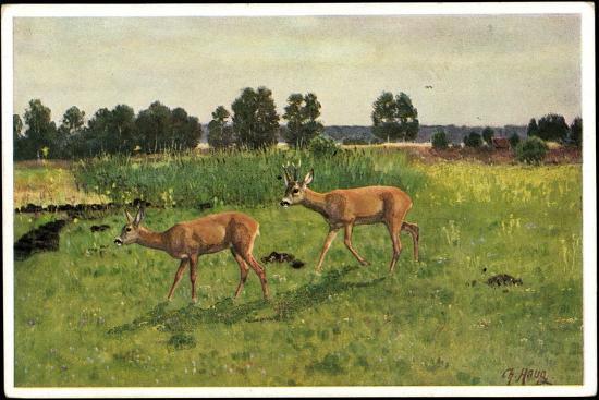 Künstler Christian Haug, Junge Rehe Auf Der Grünen Wiese--Giclee Print