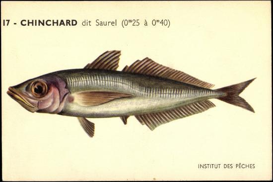Künstler Fische, Institut Des Peches, Chinchard Dit Saurel--Giclee Print