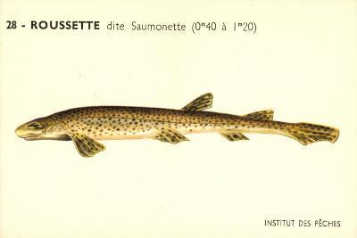 Künstler Fische, Institut Des Peches, Roussette Dite Saumonette--Giclee Print