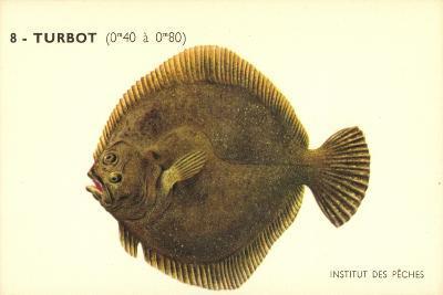 Künstler Fische, Institut Des Peches, Turbot, Flunder--Giclee Print