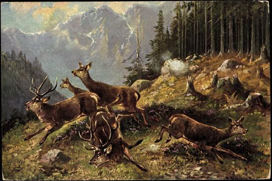 Künstler Hirsche Am Waldrand, Aufgeschreckt Und Fliehen--Giclee Print