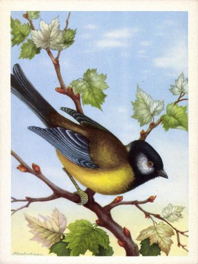 Künstler Kohlmeise, Parus Major, Vogel, Paridae--Giclee Print