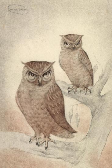 Künstler Swildens, Zwei Eulen Sitzen Auf Den Ästen Des Baumes--Giclee Print