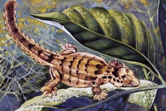 Kuhl's Flying Gecko (Ptychozoon Kuhli), Gekkonidae--Giclee Print