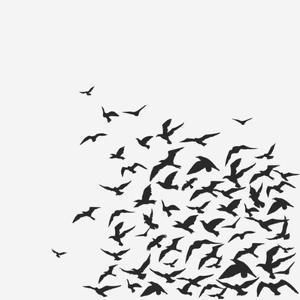 A Birds' Flock by kusuriuri